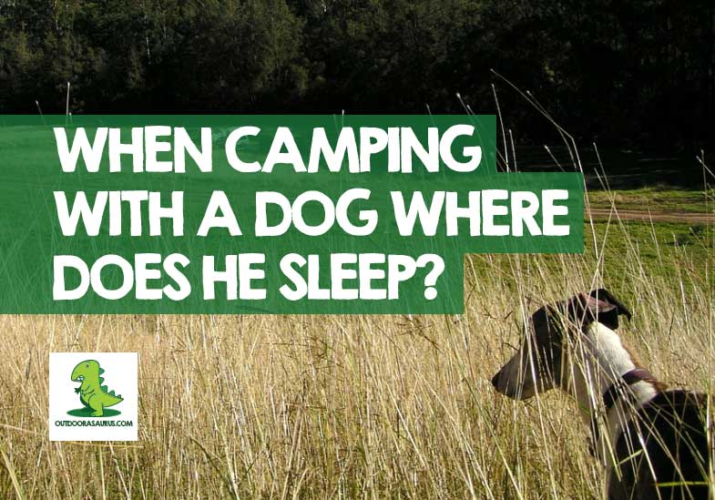 How do you tent camp with a dog