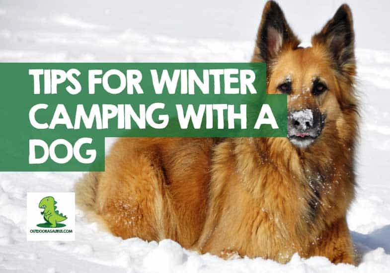 Winter Camping with a Dog
