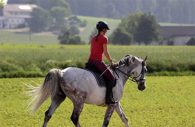 Horse Riding When Pregnant: Can You Ride? Risks, Benefits