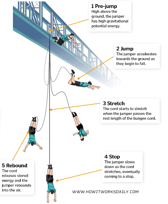 how does bungee jumping work