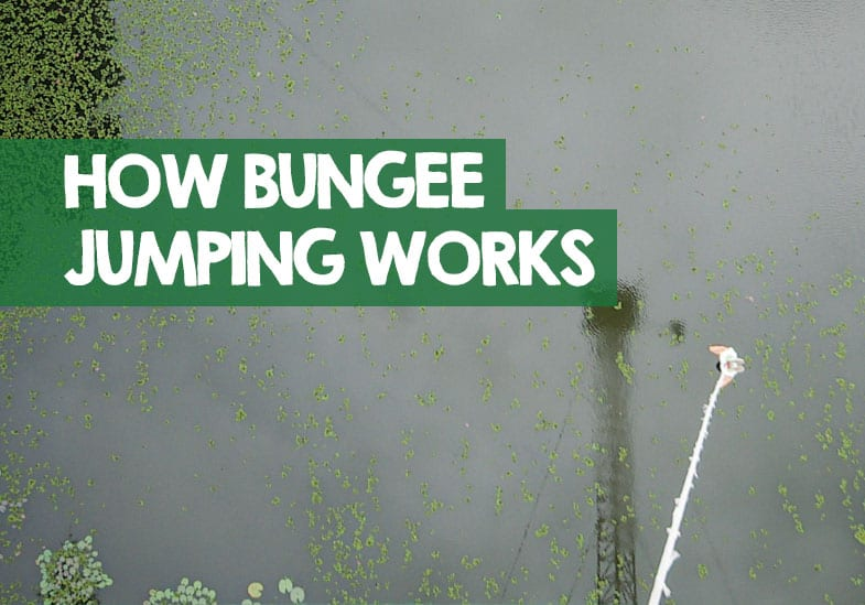 how a bungee jump works